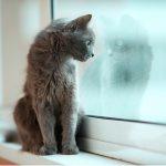 A. J. Finn: Nainen ikkunassa