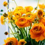 yellow orange flowers in bloom
