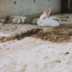 photo of rabbit lying on ground