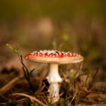 macro photography of red and brown mushroom